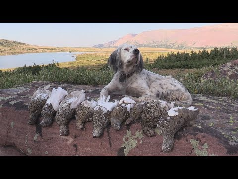 Hunting Ptarmigan In Utah's Uinta Mountains