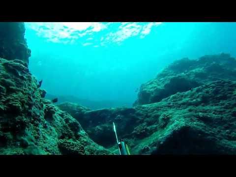 chasse sous marine île de la REUNION