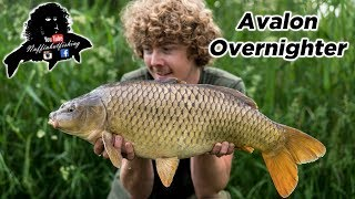 CARP FISHING Somerset Levels