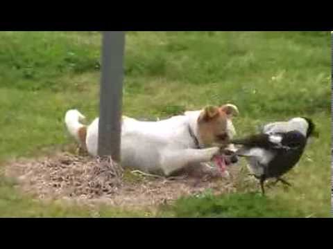 Funny Bird playing with little puppy