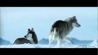 Download a bird hunt of the dogs (extract from Eight below) Mp3 and Videos
