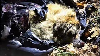 Трогательная история собаки, которую замотали в пакет и выбросили в мусорный бак…
