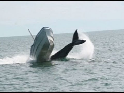Whale Collides With Fishing Boat 2013 HQ - YouTube