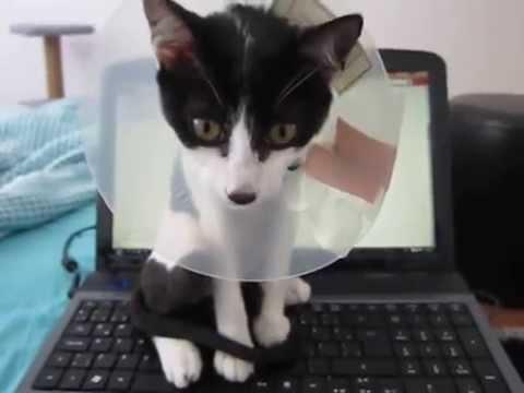 Boyunlukla Temizlik Yapan Kedi Youtube