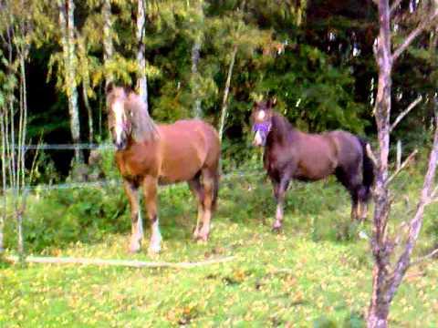 Knulla med hästar