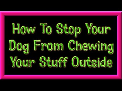 How To Train A Dog To Stop Chewing