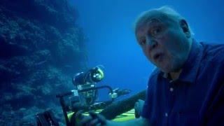 Naar de haaien | Great Barrier Reef with David Attenborough