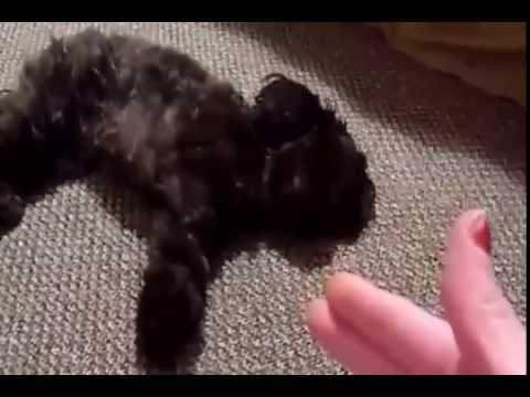 Funny Dogs Playing Dead