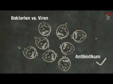Wenn Zombies Krank Machen - Unterschied Zwischen Bakterien Und Viren