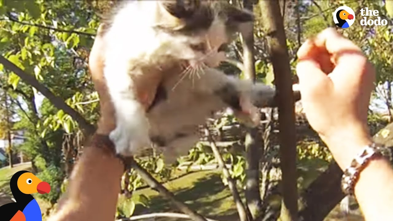 Kittens Meowing in Tree Rescued by Brave Biker