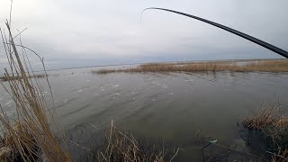 Озеро Уелги БЕШЕНЫЙ ЖОР КАРАСЯ ПЕРЕД ИКРОМЕТОМ РЫБА СОБРАЛАСЬ К НАМ СО ВСЕГО ОЗЕРА СЕЗОН 2020