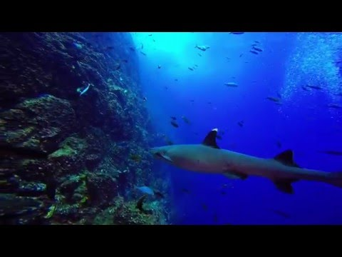 Archipelago Revillagigedo - My Fins Attached Adventure