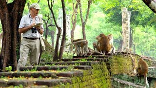 This Scientist Has Been Studying Monkeys for Over 50 Years