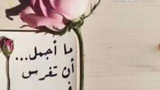 حبيبي صباح الخير بدون ميوزك Mp3