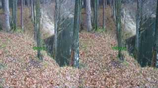 Город Заречный.Лесной пруд. 3D видео.Горизонтальная стереопара.