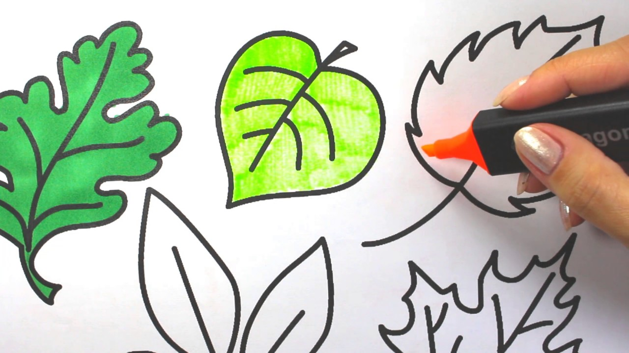 leaves trees coloring pages how to color leaves - YouTube