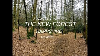 New Forest walk |  Hampshire