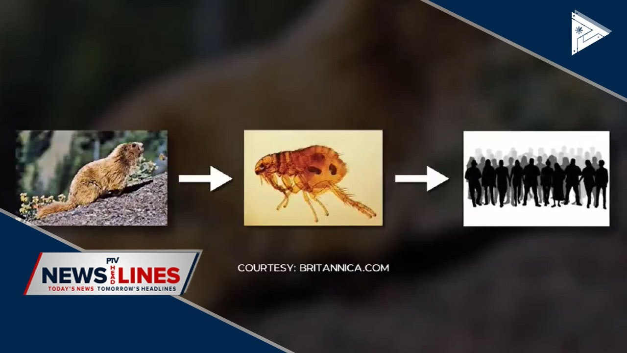 Bubonic plague returns to Asia - YouTube
