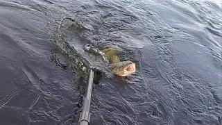Рыбалка на НАЛИМА и не только  С друзьями на Печоре #1