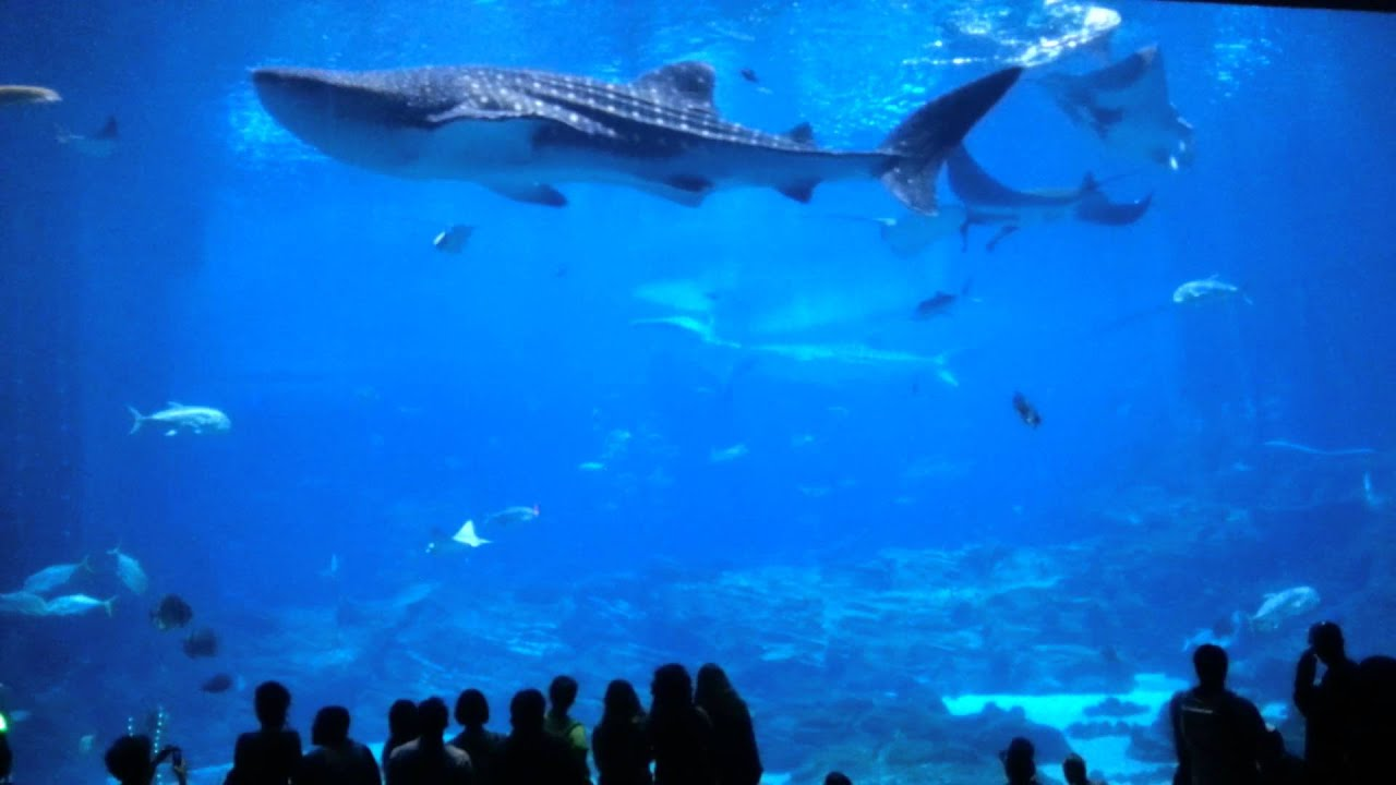 Dragoncon Night At The Aquarium Youtube