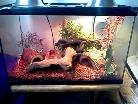 10 Gallon Snake Setup - YouTube 10 Gallon Vivarium
