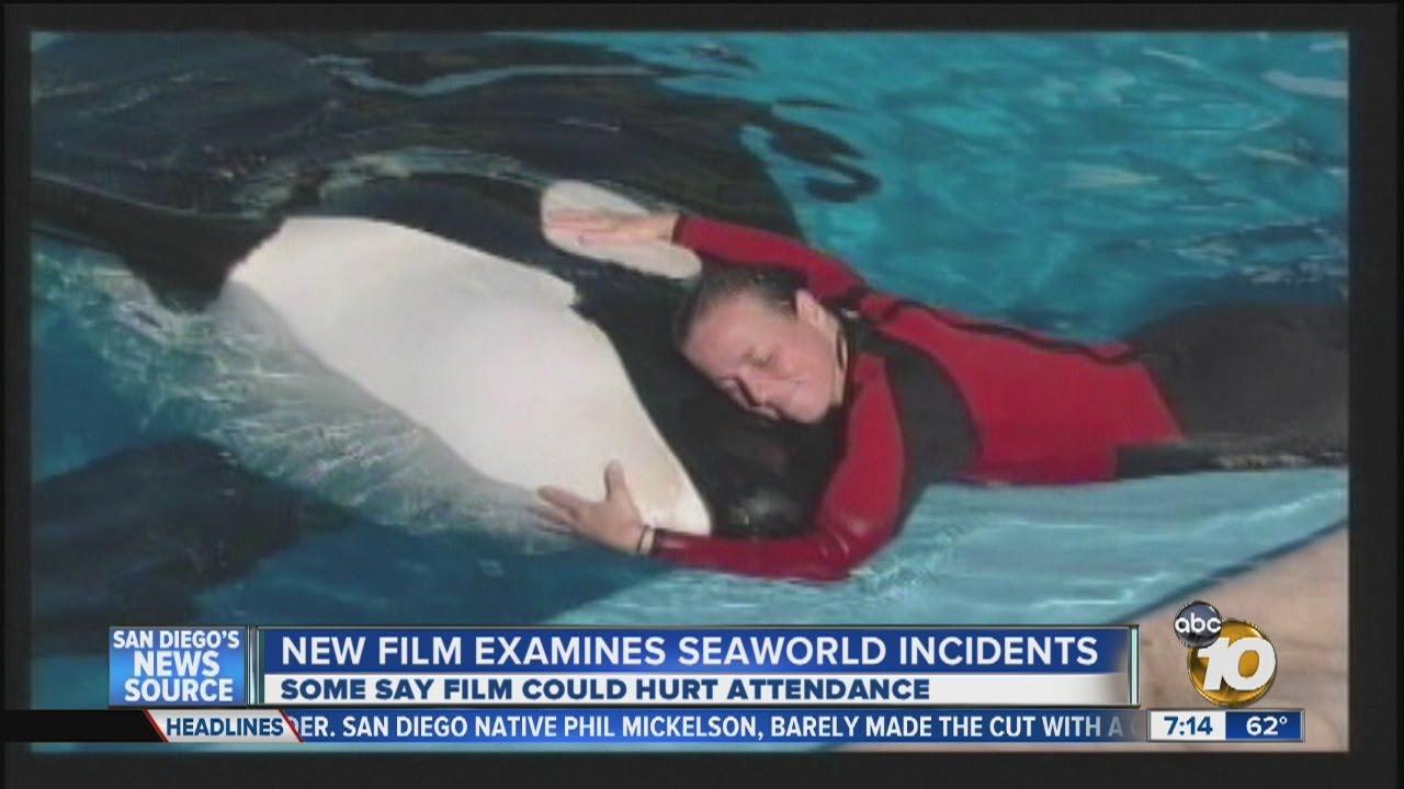 New Documentary Focuses On Seaworld Incidents Youtube
