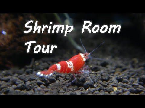 Shrimp Room Tour 蝦 虾