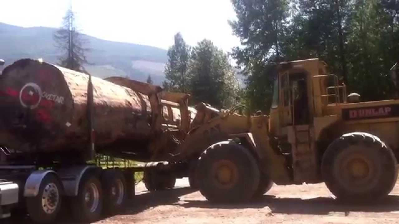 Three Log Load ~ Cat loader tries lifting foot spruce one log load off
