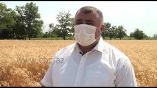 Как будут передвигаться фермеры в период усиленного карантинного режима?