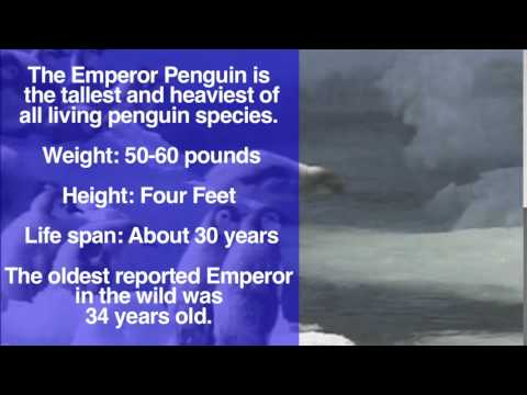 Cool Jobs Antarctic Penguin Researcher  Discovery News
