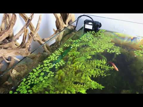 Aquascaping Tips - DIY Simple Solar Energy Filtration System