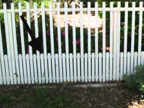 Front Yard Fence With Animal Protection Construction