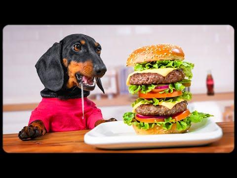 Don't trust cute dachshund eyes: A Fat Belly!