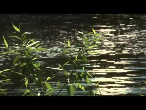Del 4 av 12 Svenska hemligheter  SVT Play  Sveriges hemligaste fiskeställe