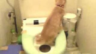 Fu on Toilet Training, March 2007