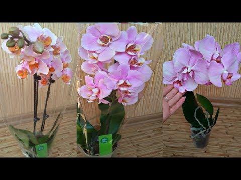 Обзор самых редких орхидей ... Крупные цветы и ароматные орхидеи с названиями !!!