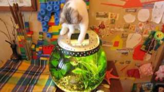 кот и аквариум / cat and fish