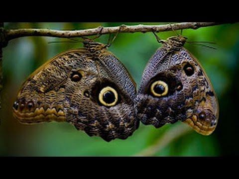 бабочки редкие фото