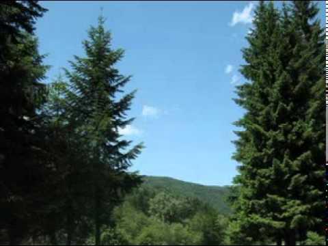 Nelu Bucur-Bradului la munte-i place