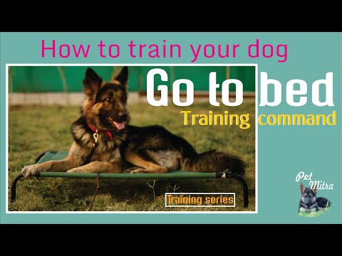 Dog go to bed training by Akram Khan |