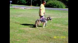 Dog Training,adoption Animal Behavior-rescue Expert Atlanta Ga Helen Sutton