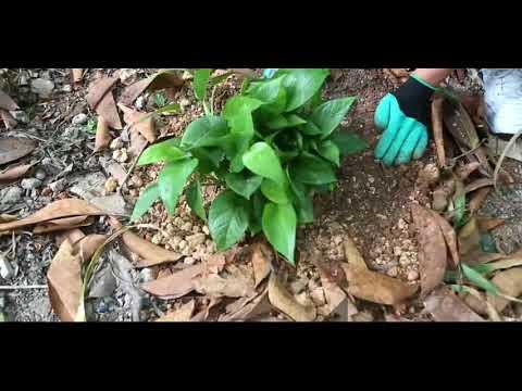 1 Pair Latex Garden Work Gloves Claws Design