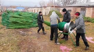 видео Новогодняя живая сосна с доставкой на дом