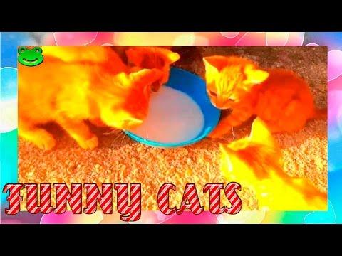 Best Funny Cats Compilation Funny Cat Videos # 1 Прикольные Смешные коты