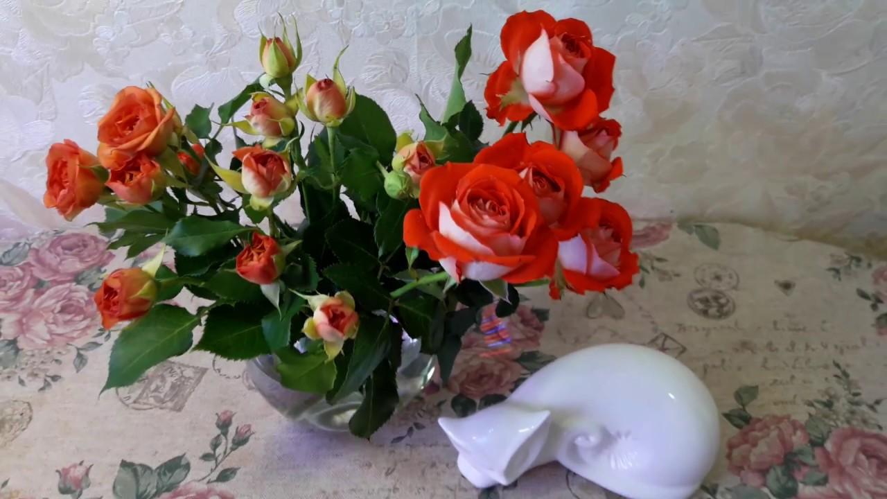 Восьмимартовские розы, можно ли  укоренить/ Подарки для меня