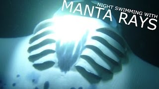 amazing night swim with manta rays off hawaii island