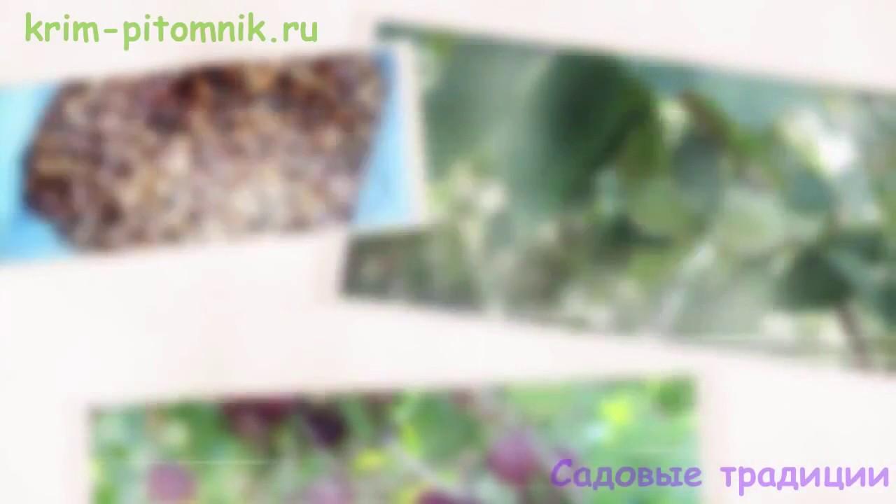Шанти лавка предлагает купить абрикосовые косточки, ядра. Высший сорт 250г в минске по отличной цене. Доставка по всей беларуси.