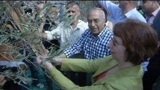 Ramallah, Ashton: per gli ulivi è guerra economica