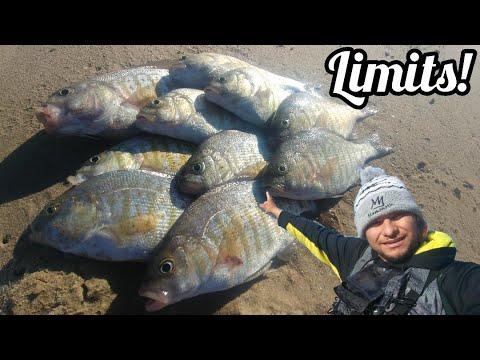 California Surf Fishing Perch Limits!