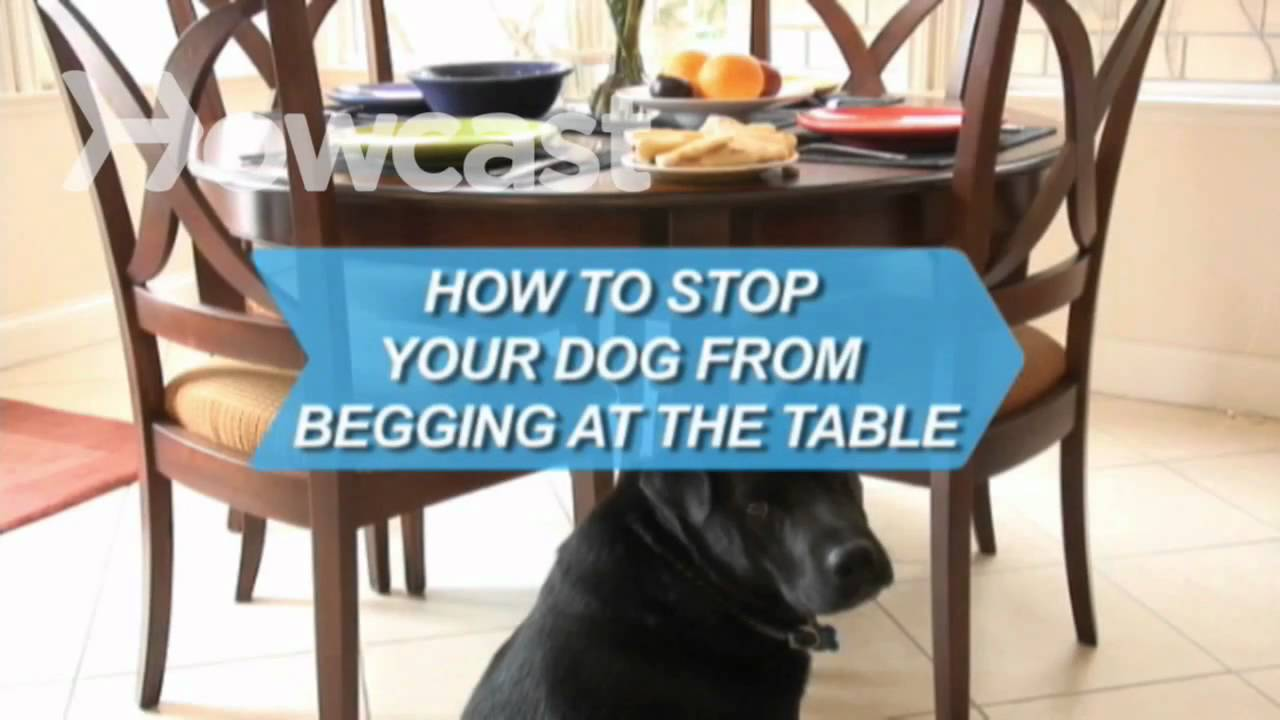 How to Stop Your Dog from Begging at the Table - YouTube